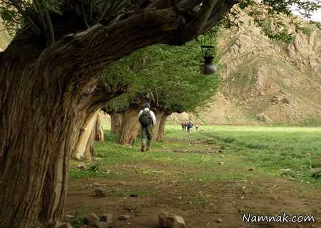 پارک جنگلی خرگوش دره